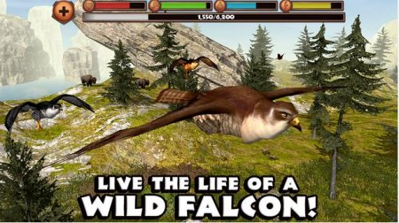 Falcon Simulator
